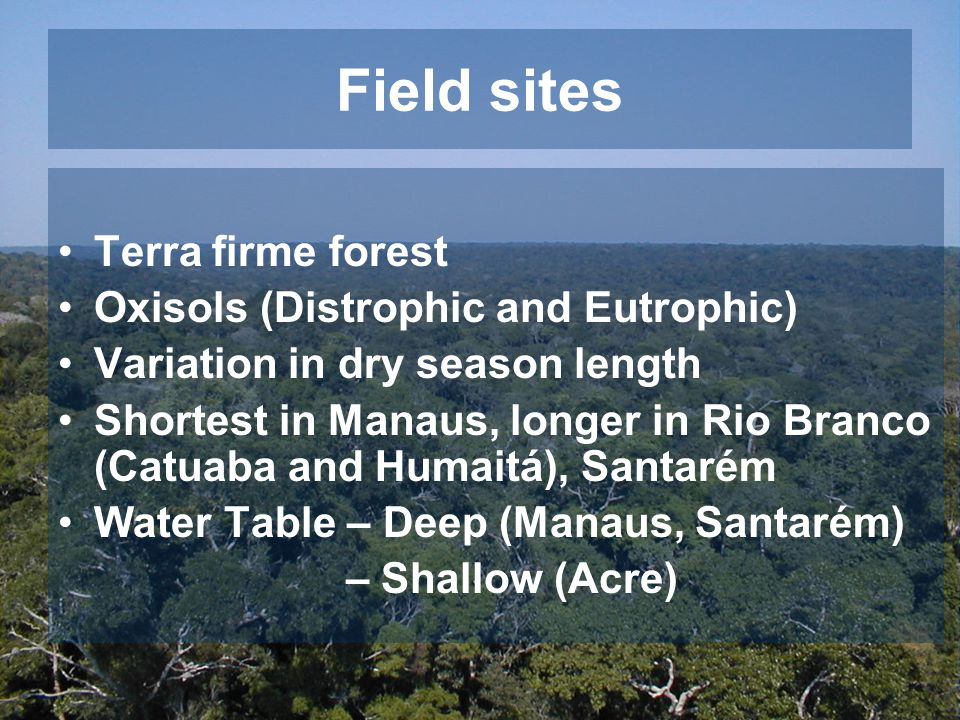 Field sites Terra firme forest Oxisols (Distrophic and Eutrophic) Variation in dry season length Shortest in Manaus, longer in Rio Branco (Catuaba and Humaitá), Santarém Water Table – Deep (Manaus, Santarém) – Shallow (Acre)