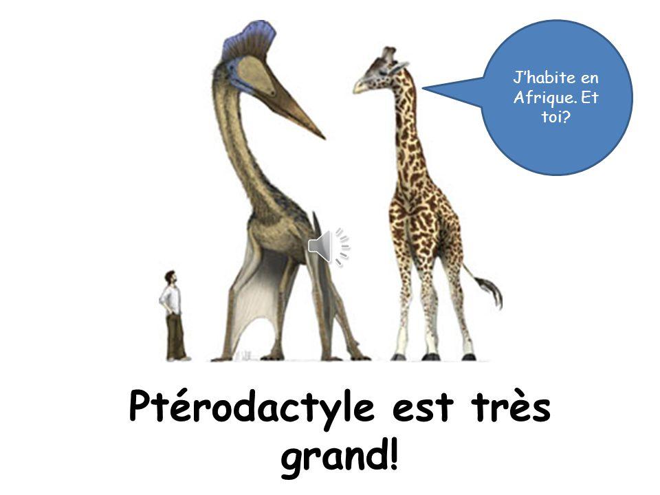 Ptérodactyle est grand ou petit?