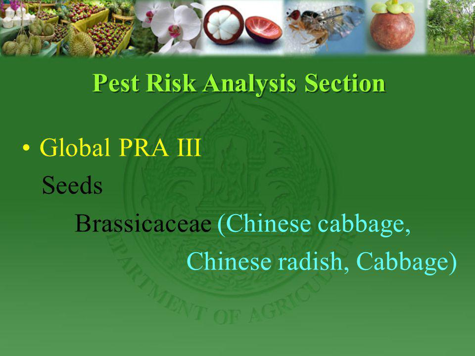 Global PRA III Seeds Brassicaceae (Chinese cabbage, Chinese radish, Cabbage) Pest Risk Analysis Section