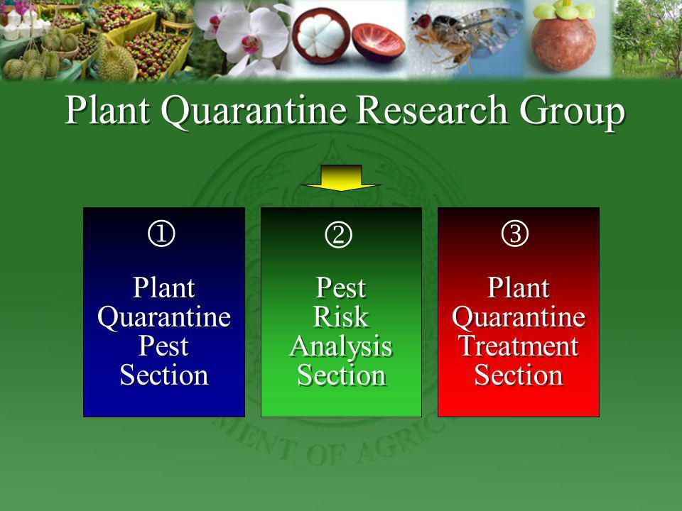 Plant Quarantine Pest Section Inspection of certain export/import consignments Pest diagnosis Monitoring Develop of detection techniques Inspection of certain export/import consignments Pest diagnosis Monitoring Develop of detection techniques