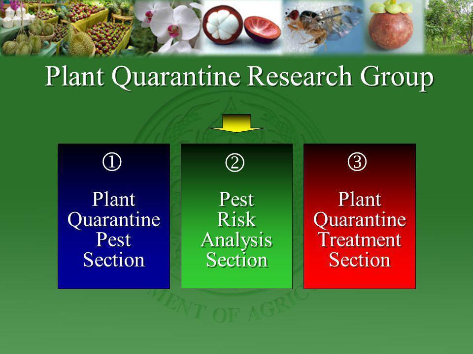 Plant Quarantine Research Group Plant Quarantine Pest Section Plant Quarantine Pest Section Pest Risk Analysis Section Pest Risk Analysis Section Plan