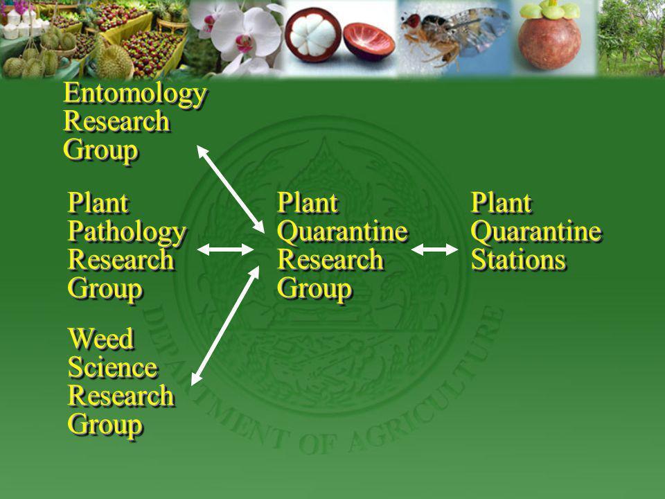 EntomologyResearchGroupEntomologyResearchGroup Plant Pathology ResearchGroup ResearchGroup Weed Science ResearchGroup ResearchGroup Plant Quarantine R