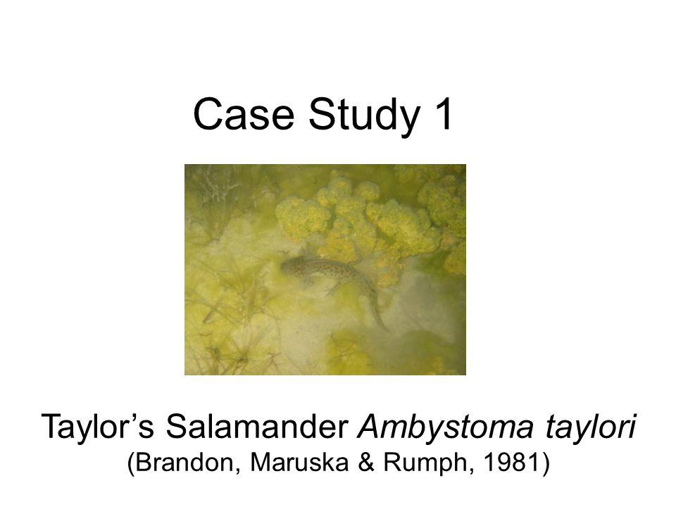 Case Study 1 Taylors Salamander Ambystoma taylori (Brandon, Maruska & Rumph, 1981)