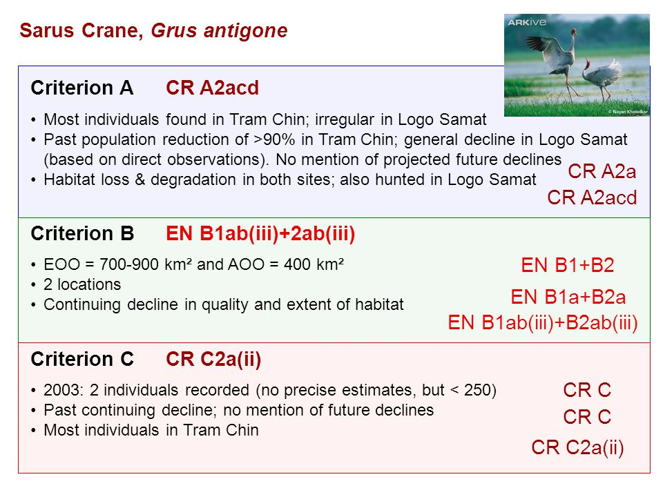 Criterion A Criterion B Criterion C Most individuals found in Tram Chin; irregular in Logo Samat Past population reduction of >90% in Tram Chin; general decline in Logo Samat (based on direct observations).