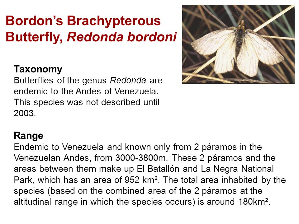 Taxonomy Butterflies of the genus Redonda are endemic to the Andes of Venezuela.