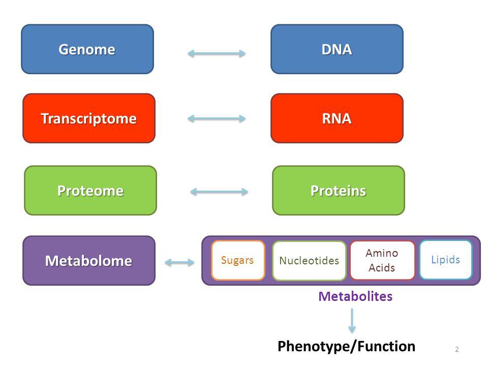 DNA RNA Proteins 2 Phenotype/Function Transcriptome Proteome Metabolome Sugars Nucleotides Lipids Amino Acids Genome Metabolites