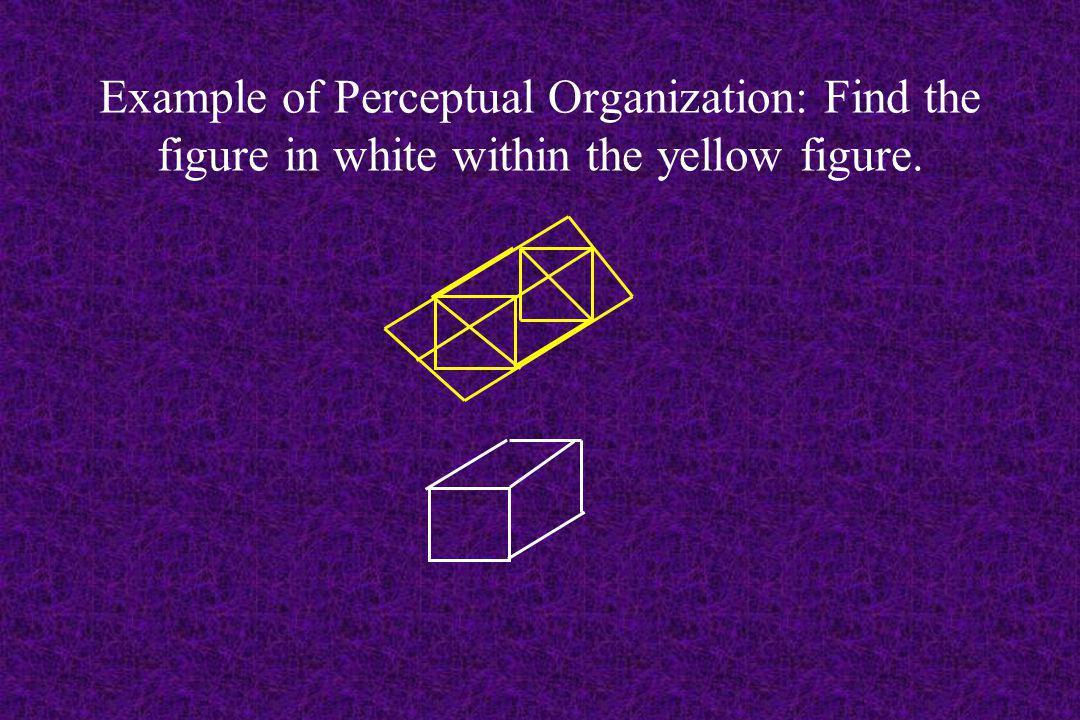 Example of Visual Perception