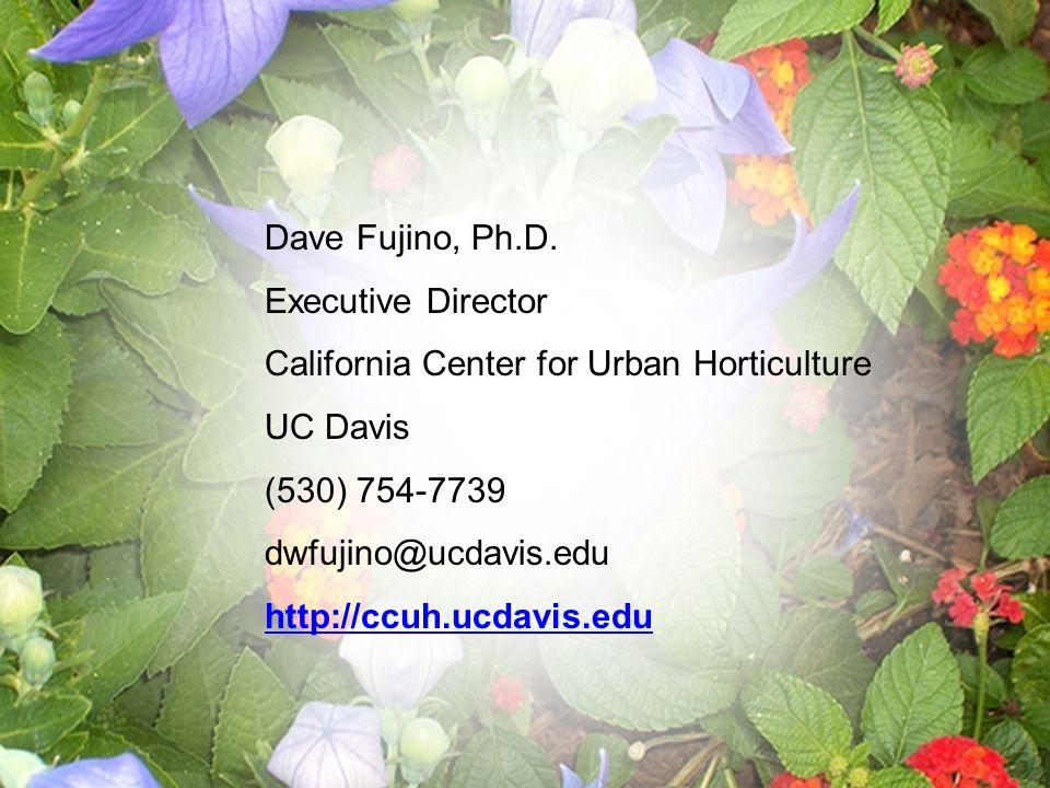 Dave Fujino, Ph.D.