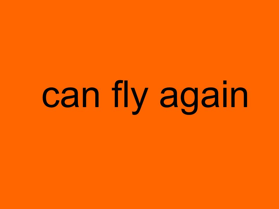 can fly again