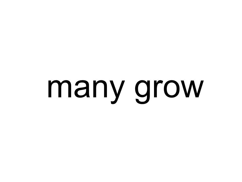 many grow