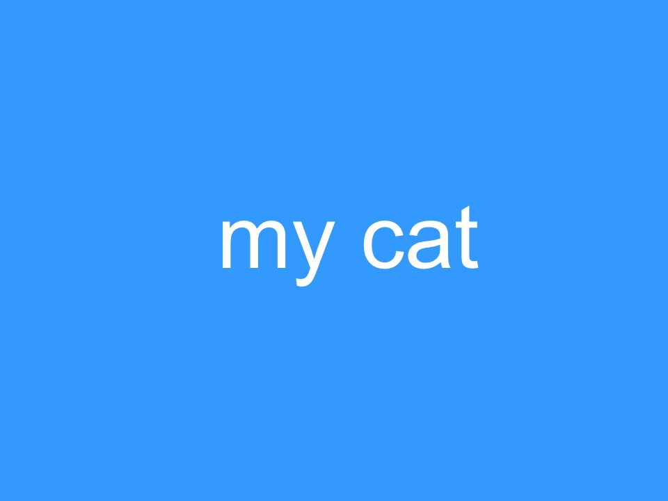 my cat