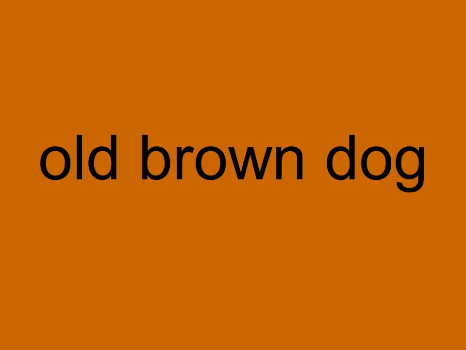 old brown dog