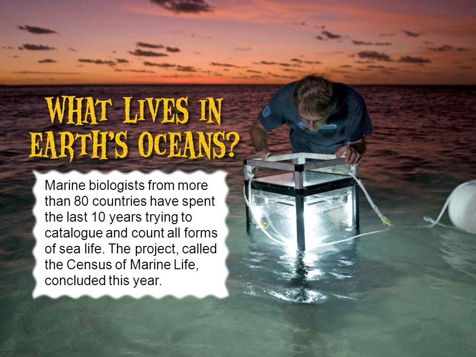 Marine biologists from more than 80 countries have spent the last 10 years trying to catalogue and count all forms of sea life.