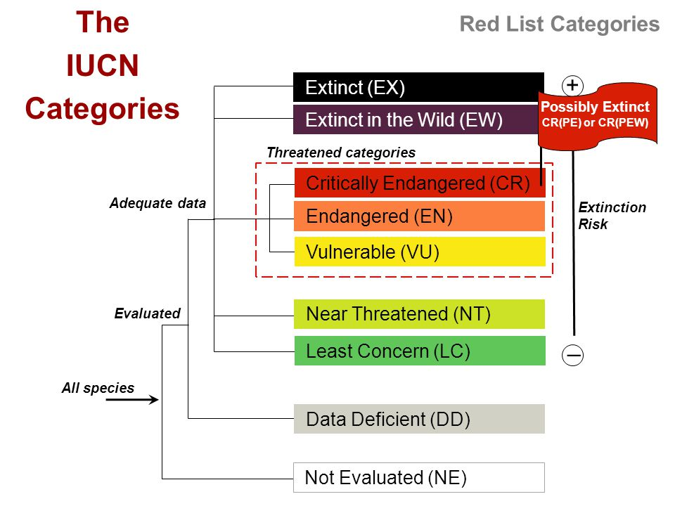 Red List Categories + _ Extinction Risk Threatened categories Extinct (EX) Extinct (EX) Extinct in the Wild (EW) Least Concern (LC) Data Deficient (DD) Adequate data All species The IUCN Categories Evaluated Not Evaluated (NE) Critically Endangered (CR) Vulnerable (VU) Endangered (EN) Near Threatened (NT) Possibly Extinct CR(PE) or CR(PEW)