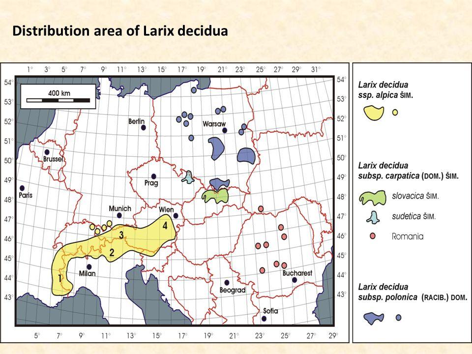 Distribution area of Larix decidua