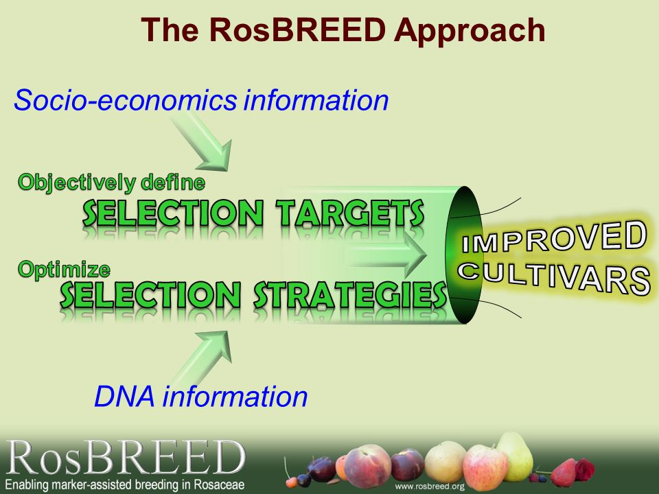 DNA information Socio-economics information The RosBREED Approach