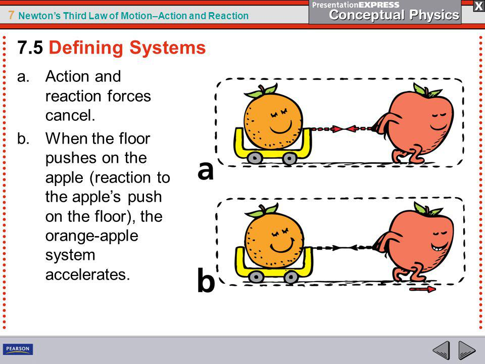 7 Newtons Third Law of Motion–Action and Reaction a.Action and reaction forces cancel. b.When the floor pushes on the apple (reaction to the apples pu
