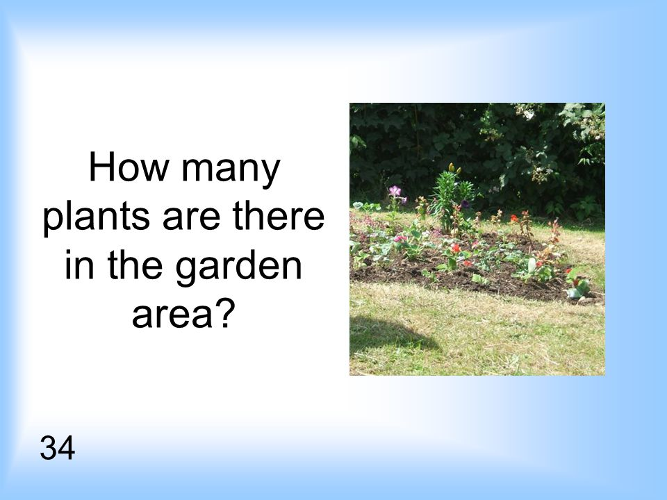 How many plants are there in the garden area 34