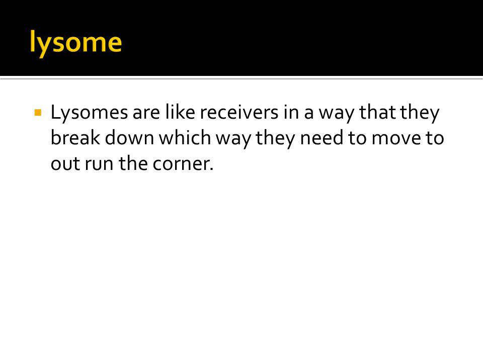 Lysomes are like receivers in a way that they break down which way they need to move to out run the corner.
