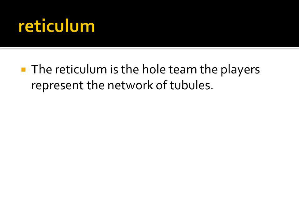 The reticulum is the hole team the players represent the network of tubules.