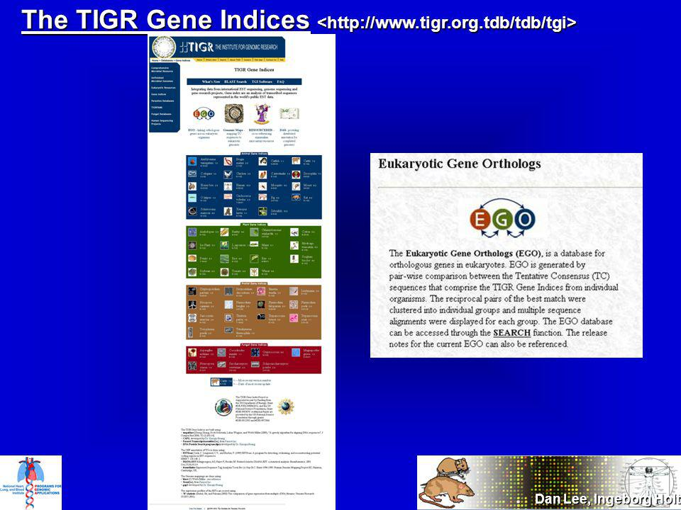 The TIGR Gene Indices The TIGR Gene Indices Dan Lee, Ingeborg Holt