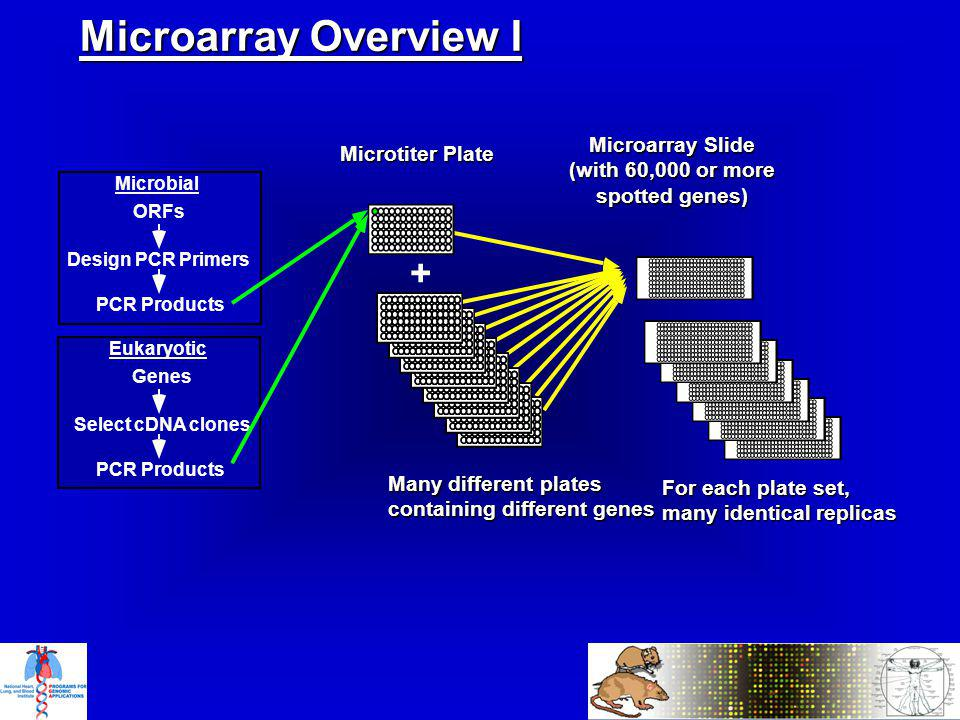 Microbial ORFs Design PCR Primers PCR Products Eukaryotic Genes Select cDNA clones PCR Products Microarray Overview I For each plate set, many identical replicas Microarray Slide (with 60,000 or more spotted genes) + Microtiter Plate Many different plates containing different genes