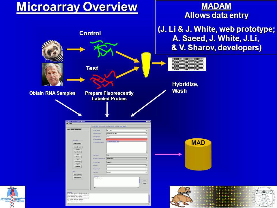 Microarray Overview MAD MADAM Allows data entry (J.