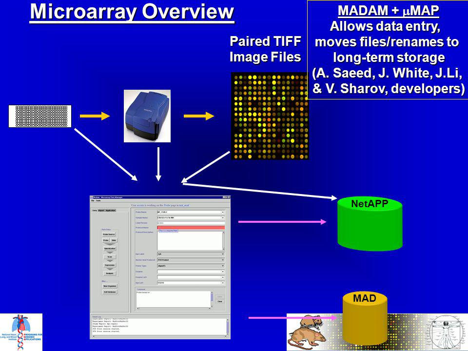 Microarray Overview Paired TIFF Image Files MADAM + MAP Allows data entry, moves files/renames to long-term storage (A.