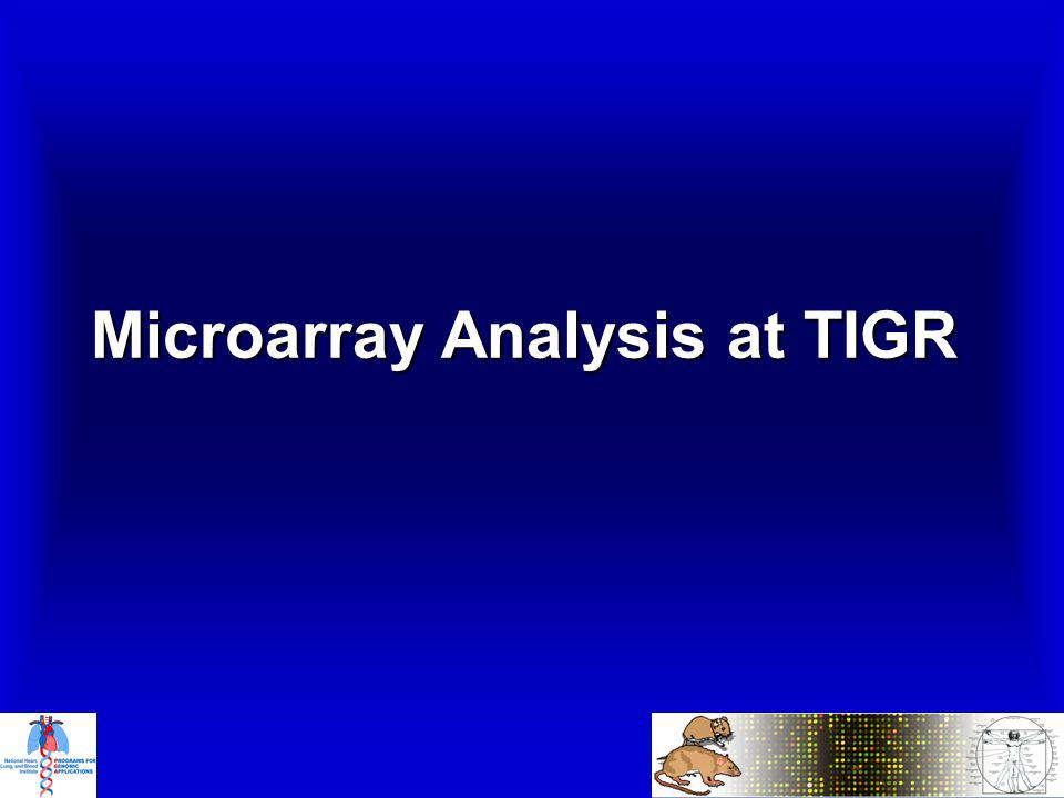 Microarray Analysis at TIGR