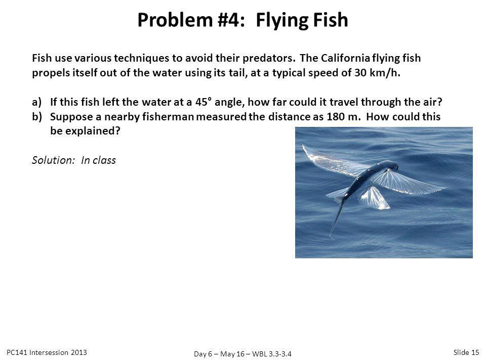 Day 6 – May 16 – WBL 3.3-3.4 Problem #4: Flying Fish PC141 Intersession 2013Slide 15 Fish use various techniques to avoid their predators. The Califor