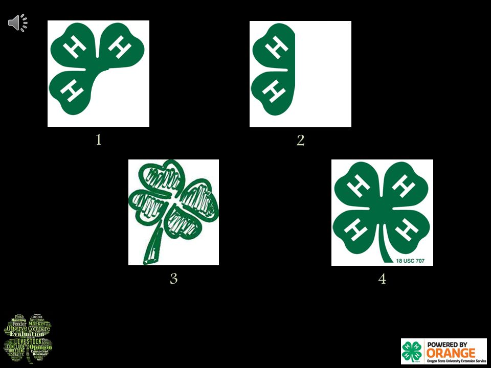 Class 1: This is a class of 4-H Clovers 4-H Clovers are used to help promote the 4-H program.