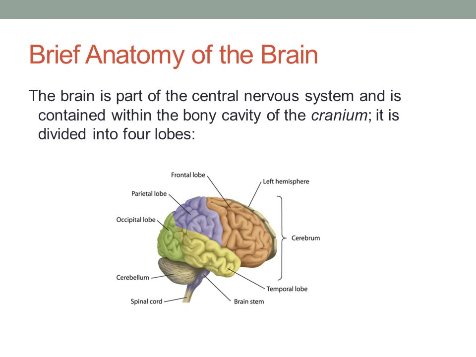 Definition of Concussion Shaking of the brain within the skull Contusion of the brain 1.7 million people annually http://www.cdc.gov/traumaticbraininjury/ http://www.cdc.gov/traumaticbraininjury/