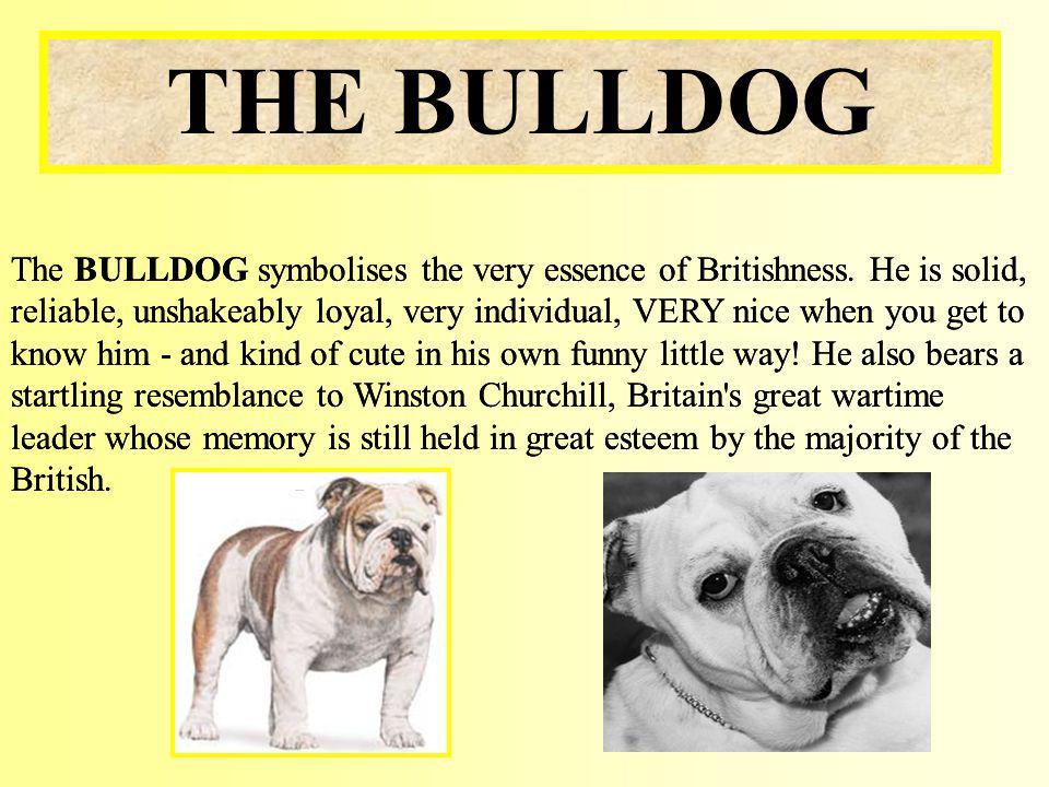 The BULLDOG symbolises the very essence of Britishness.