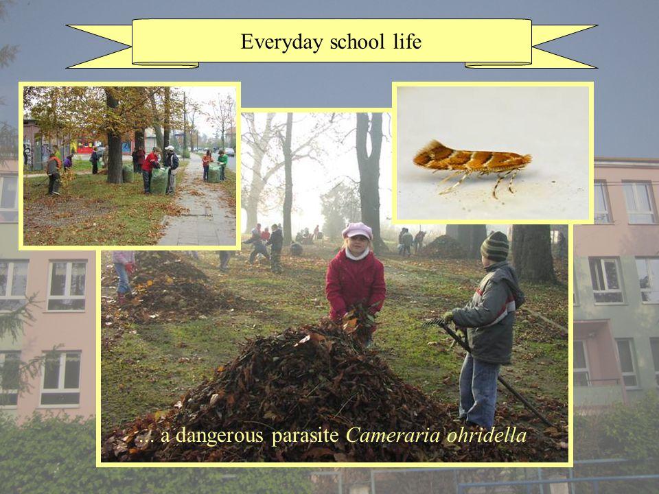 Everyday school life... a dangerous parasite Cameraria ohridella