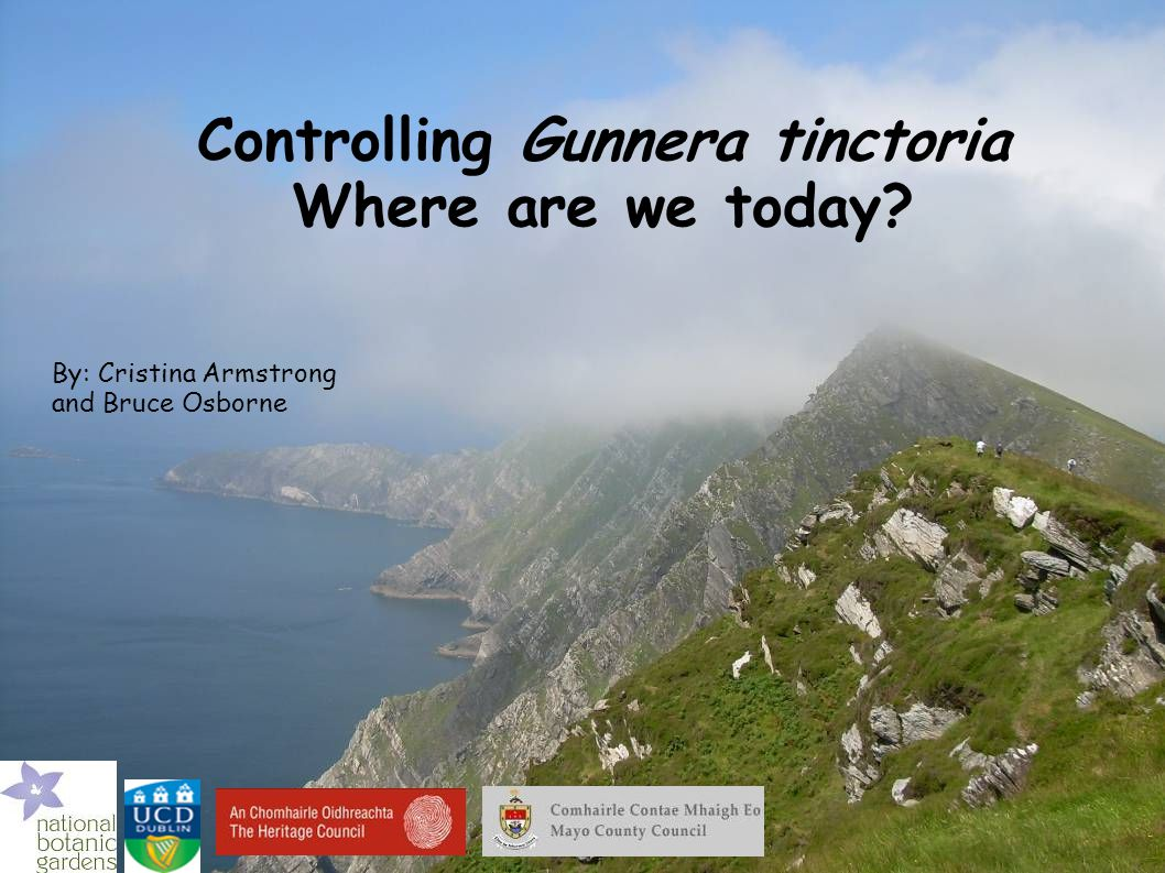 Controlling Gunnera tinctoria Where are we today? By: Cristina Armstrong and Bruce Osborne