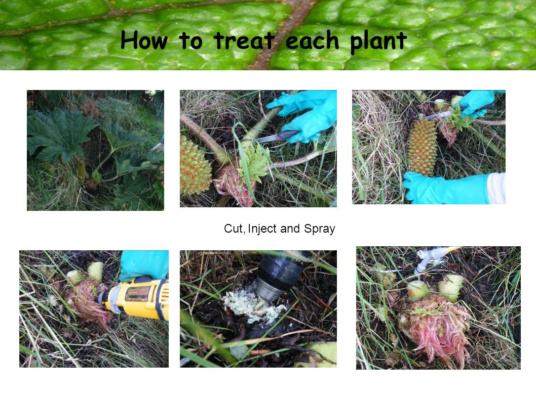 How to treat each plant Cut,Inject and Spray