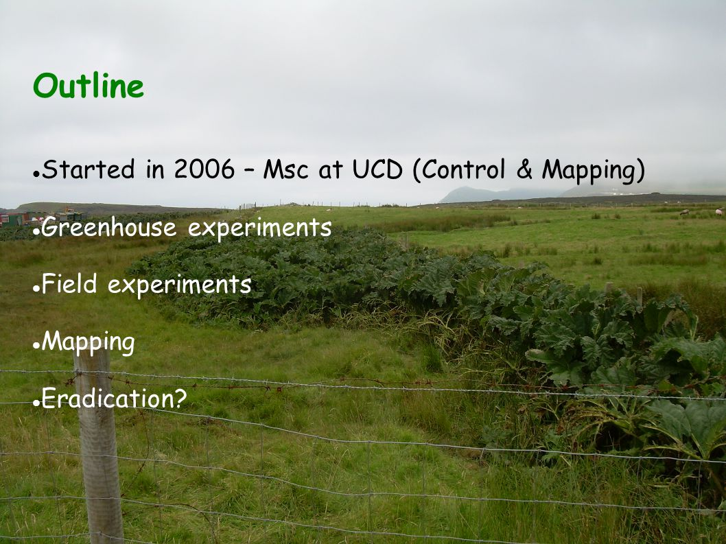 Outline Started in 2006 – Msc at UCD (Control & Mapping) Greenhouse experiments Field experiments Mapping Eradication?