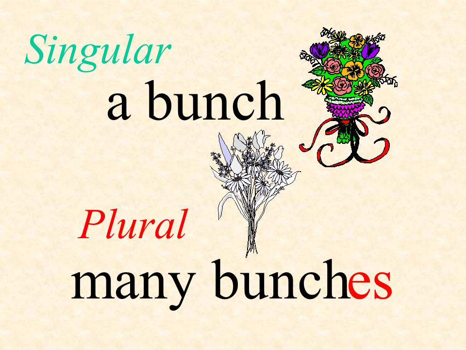 a bunch Plural Singular many bunches