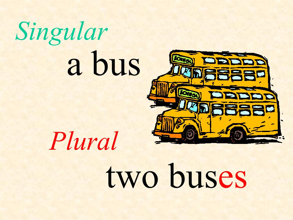 a bus Plural Singular two buses