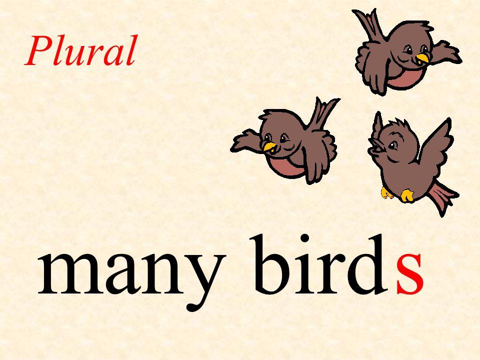 many bird Plural s
