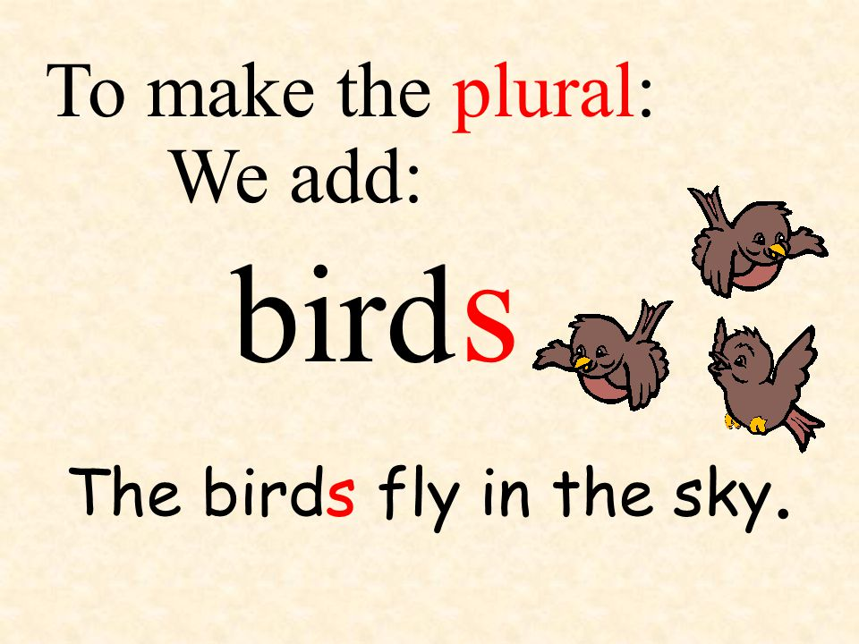 bird We add: To make the plural: The birds fly in the sky. s
