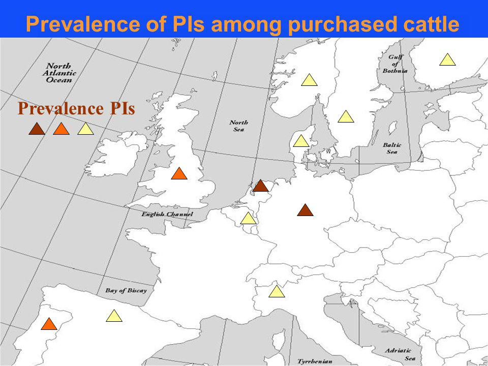 Prevalence PIs Prevalence of PIs among purchased cattle