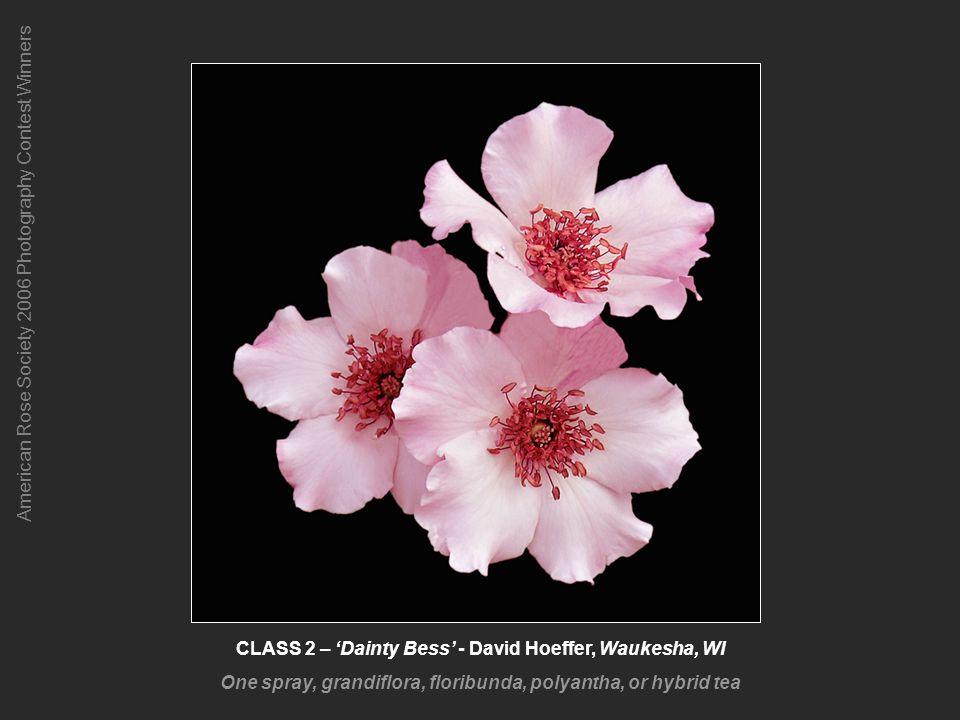 American Rose Society 2006 Photography Contest Winners CLASS 12-2 – Lyda Rose - Linda Jansing, Louisville, KY Novice Class 2 Winner