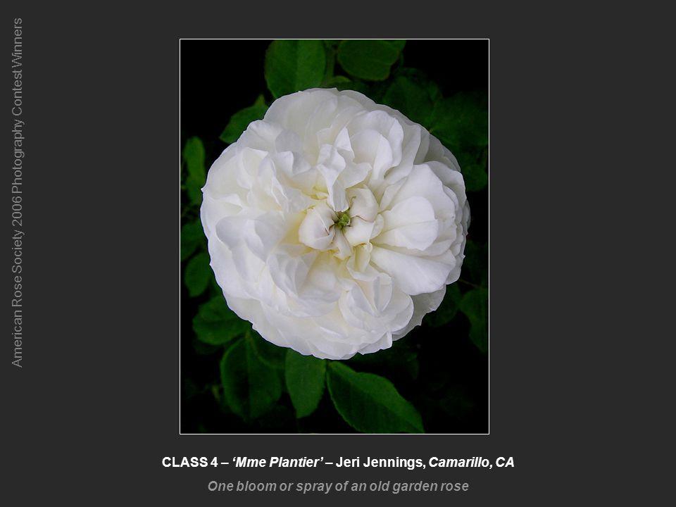 American Rose Society 2006 Photography Contest Winners CLASS 12-4 – Abraham Darby, Pam Jambor, Atwater, CA Novice Class 4 Winner