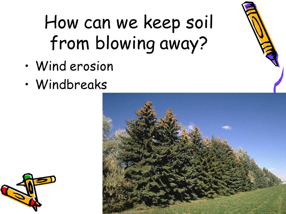 How can we keep soil from blowing away? Wind erosion Windbreaks