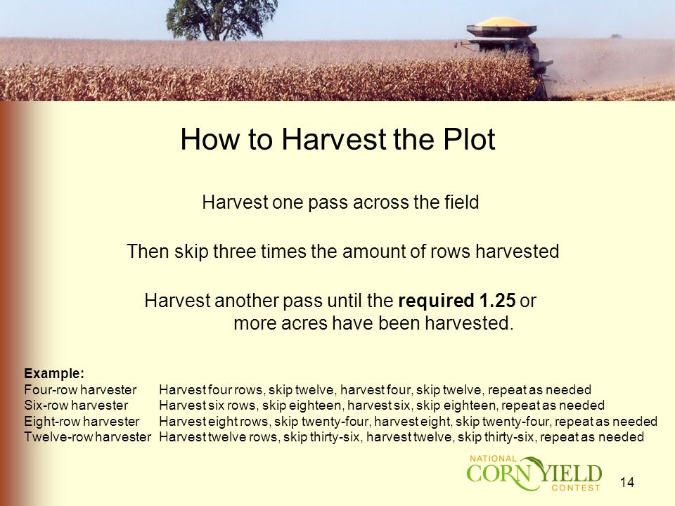 How to Harvest the Plot Harvest one pass across the field Then skip three times the amount of rows harvested Harvest another pass until the required 1.25 or more acres have been harvested.