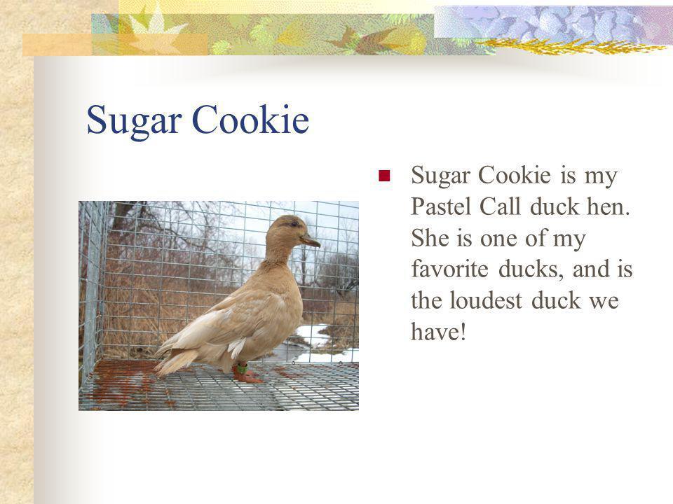 Sugar Cookie Sugar Cookie is my Pastel Call duck hen.