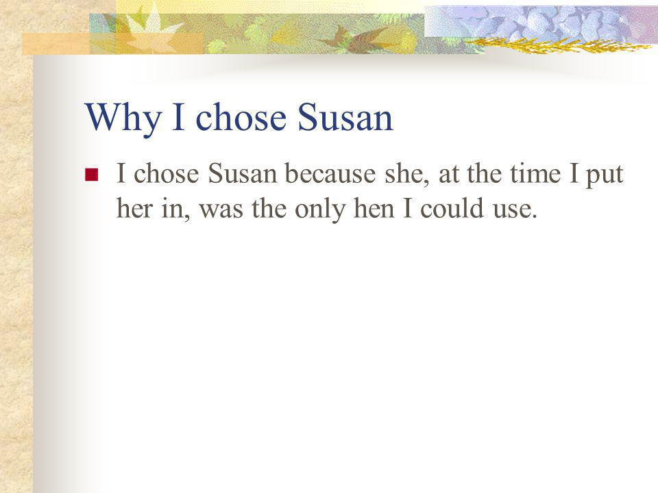 Why I chose Susan I chose Susan because she, at the time I put her in, was the only hen I could use.