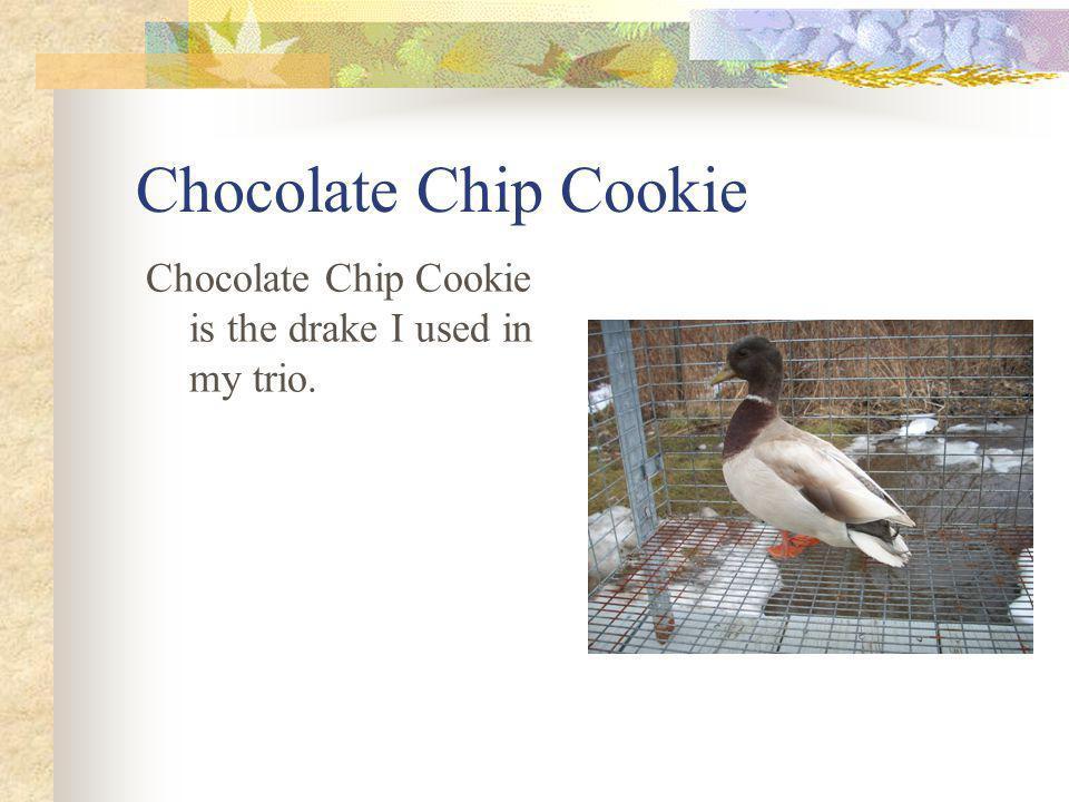 Chocolate Chip Cookie Chocolate Chip Cookie is the drake I used in my trio.