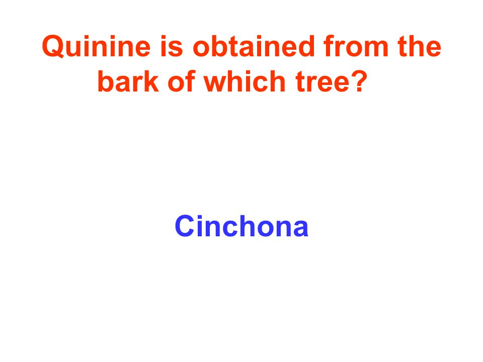Quinine is obtained from the bark of which tree Cinchona